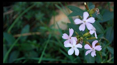 Jabón natural flores