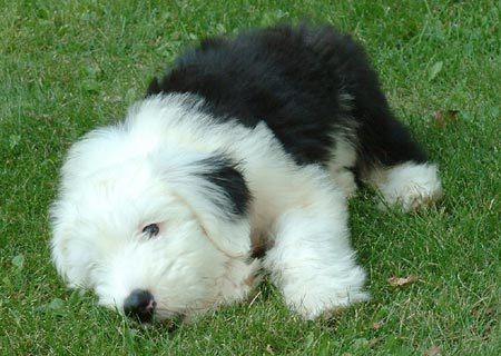 los amigos As Melhores Raças de Cães para Família