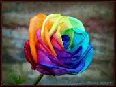 ¡Piensa en colores!