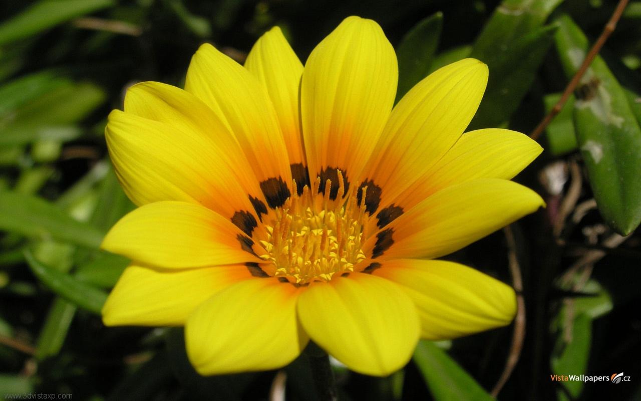 http://1.bp.blogspot.com/-oMnJ7KClMos/TbaOV6FY9DI/AAAAAAAABOU/aXuspzYiV-U/s1600/cool-flower-wallpapers.jpg