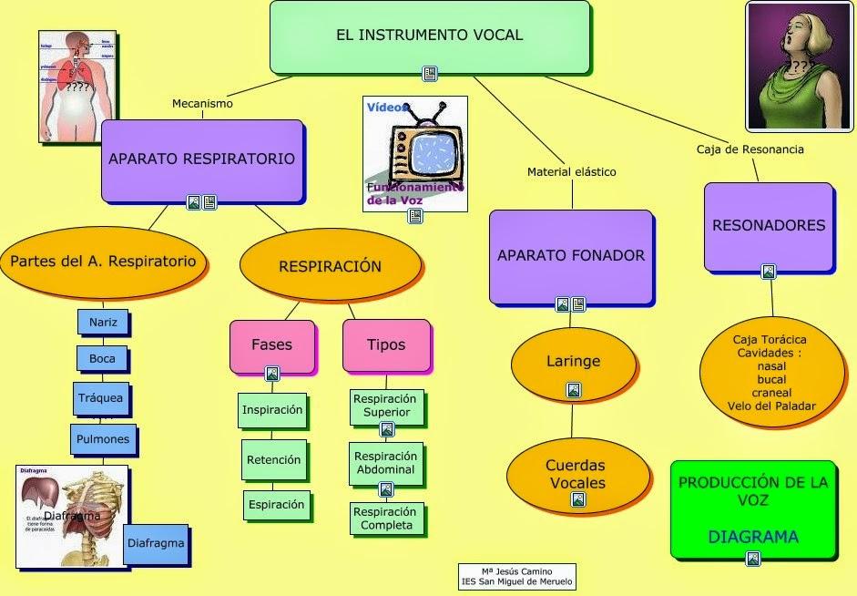 Diagrama De Los Organos Articulatorios - Basic Guide Wiring Diagram •