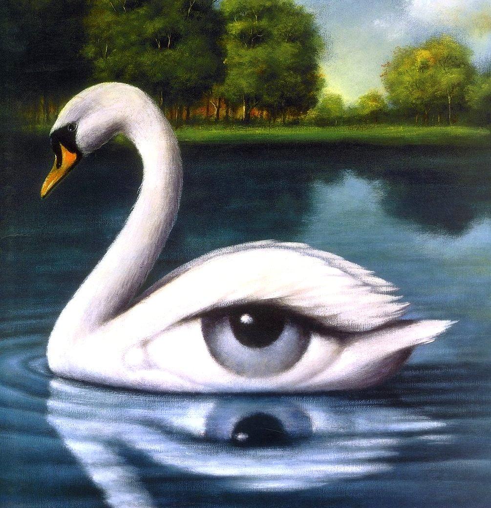 cisne-olbinski
