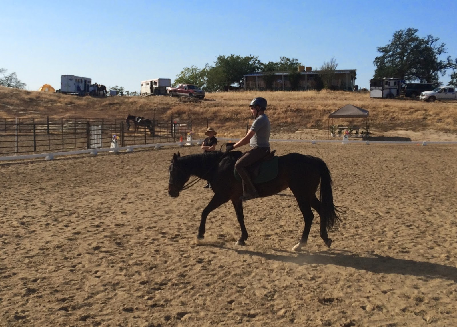 stretchy walk horse dressage