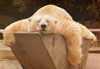 http://1.bp.blogspot.com/-oNXFnIVJYv8/UNW7QAJwgoI/AAAAAAAAB34/F7dJf1fvhvI/s320/polar+bear.jpg