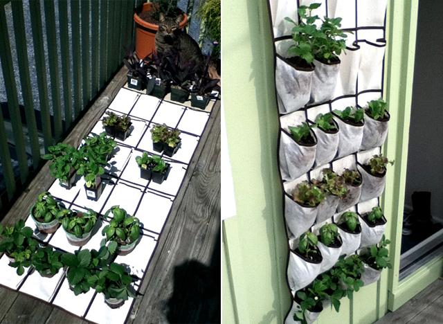 Como fazer um horta vertical usando um porta sapatos