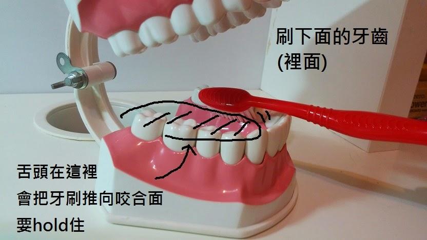 刷牙 貝氏刷牙法