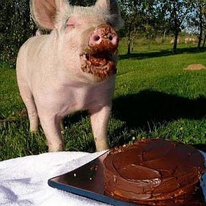 Imagenes Graciosas de Animales,Cerdo