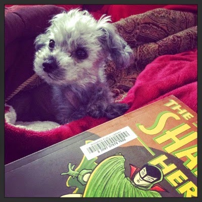 Murchie lays in a blanket cave. His head is raised and his ears are perked. In front of him lays a trade paperback copy of The Shadow Hero. The angle is such that only a portion of the cover is visible. It features a man of Asian descent wearing a mask and swirling a green cape around himself.