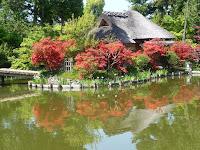 梅宮大社の神苑はキリシマツツジで様変わりしてた。