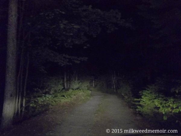 Headlights shine down dark forest road into McClellan Park campsite, Milbridge, Maine