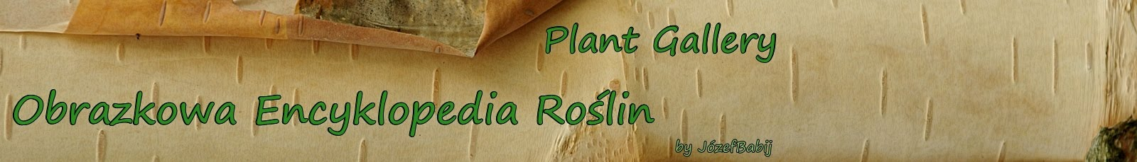 Plant Gallery - Encyklopedia Roślin