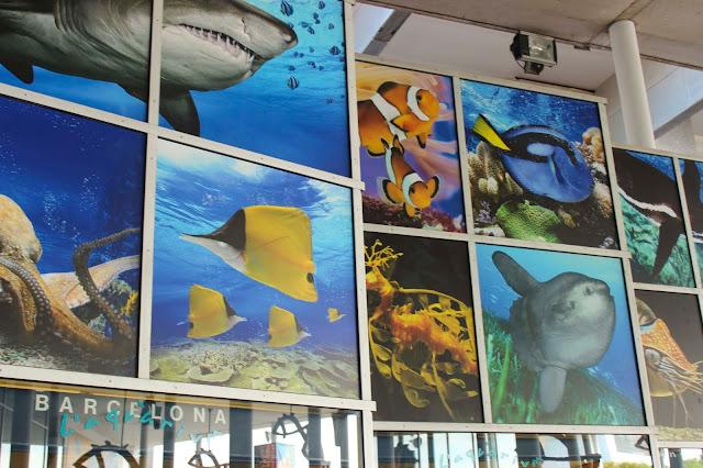 Barcelona Aquarium | Barcelona | Chichi Mary Blog