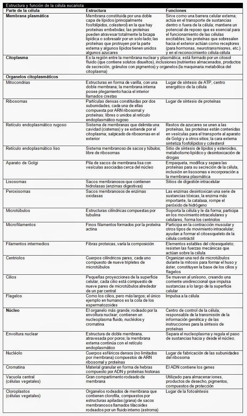 La célula. Estructura y funciones | Apuntes de Biotecnología