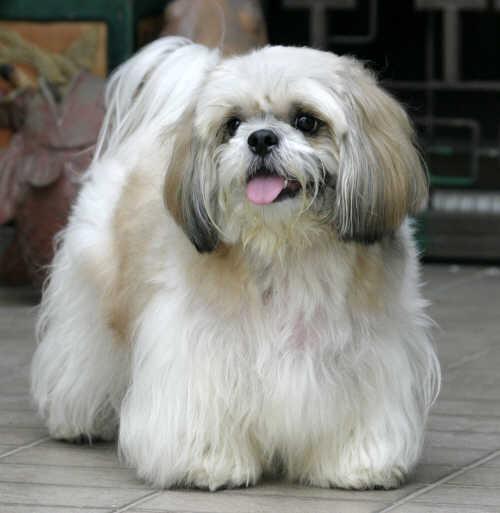 Breeds Dog: November 2012