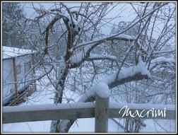 Adoro la neve