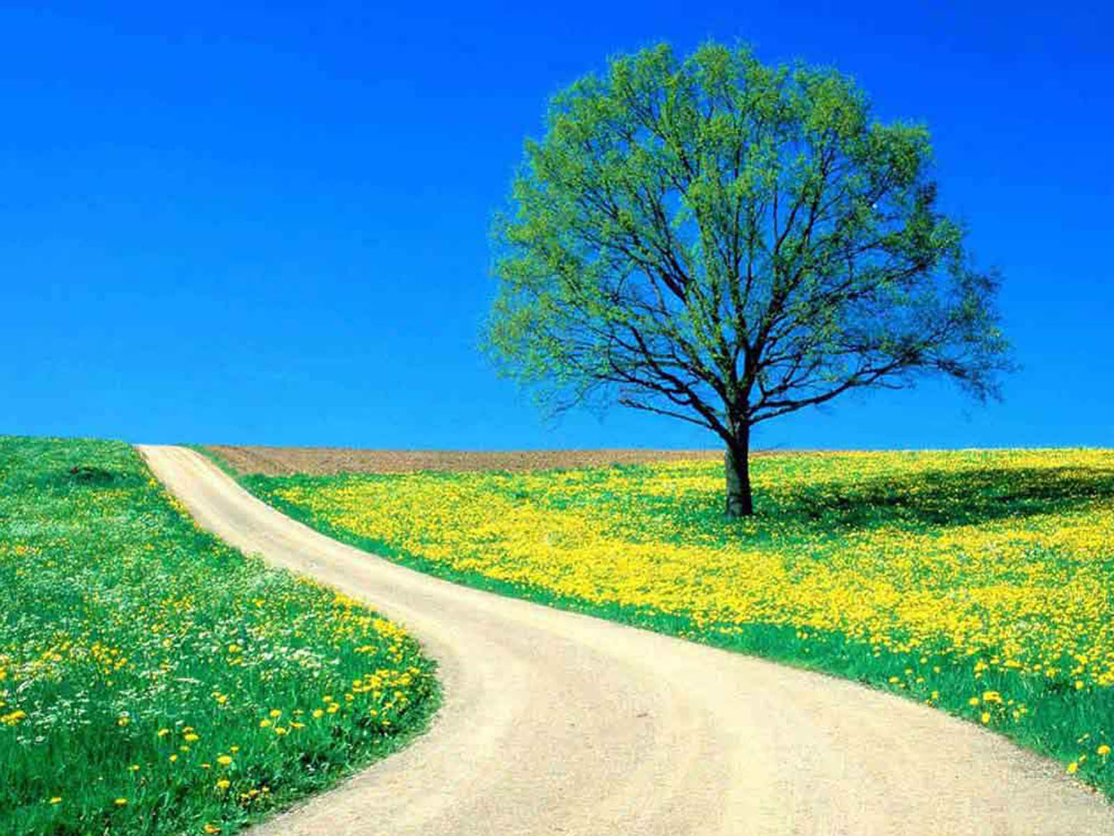 wallpaper  lonely tree paography wallpapers