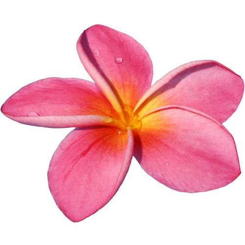 flores de hawaii car interior design