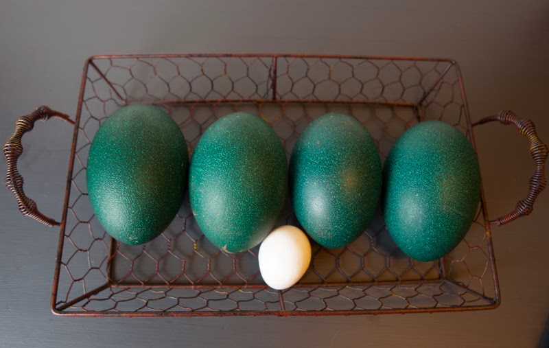 What to do with Emu Eggs shared by The Egg Farm