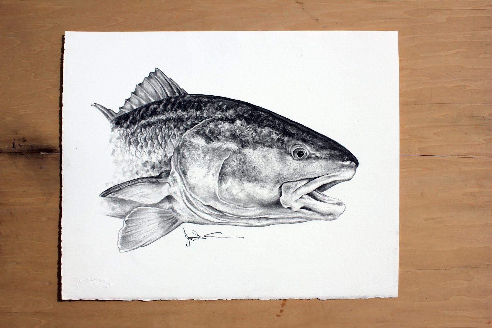 RedfishRedfish Drawing