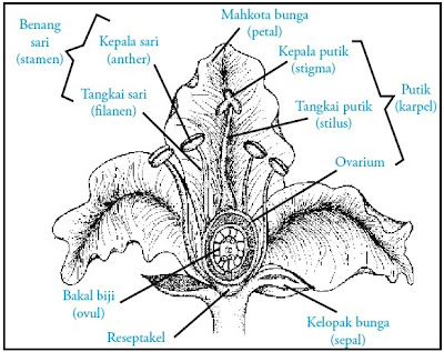 Bagian-bagian bunga Angiospermae