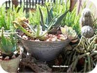 Gardening in Africa