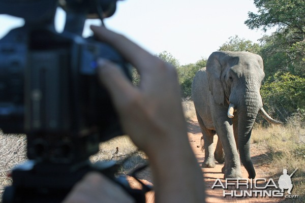 Tourist taking a picture of an elephant in Botswana