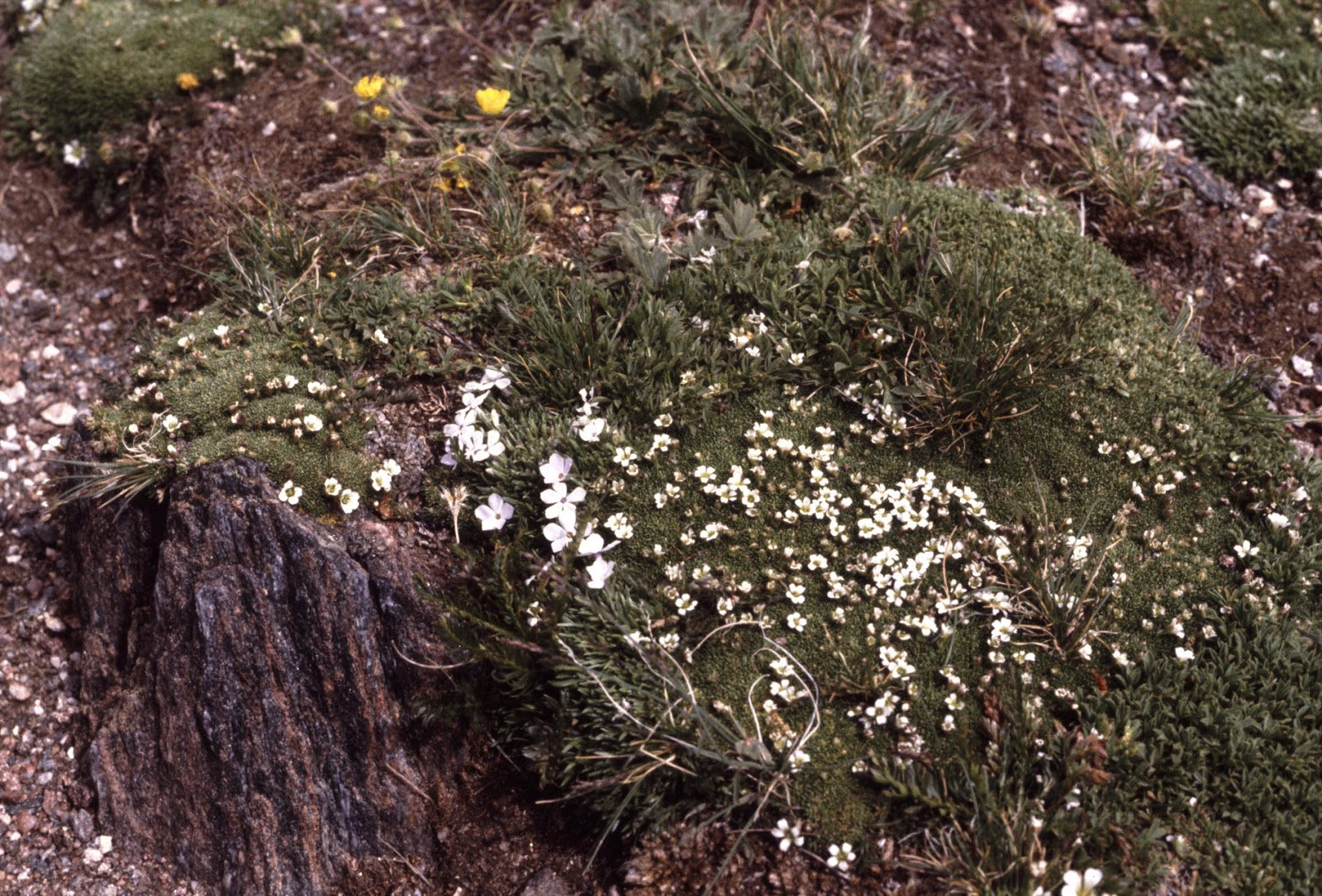 Flowers close to the rock