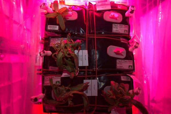 plantas no espaço folhas plantação NASA