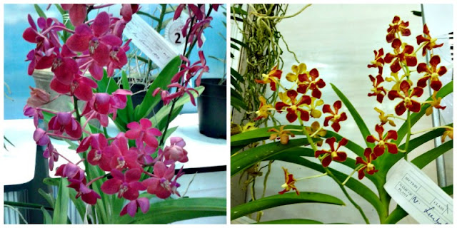 red-orchids
