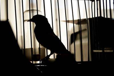 http://1.bp.blogspot.com/-oQQ6EY8f8Pk/UfJXZw_naWI/AAAAAAAAAEs/N-dKxHxyRE4/s320/pajaro_y_jaula_y_oscura-alejandrastamateas_mundoeva.jpg