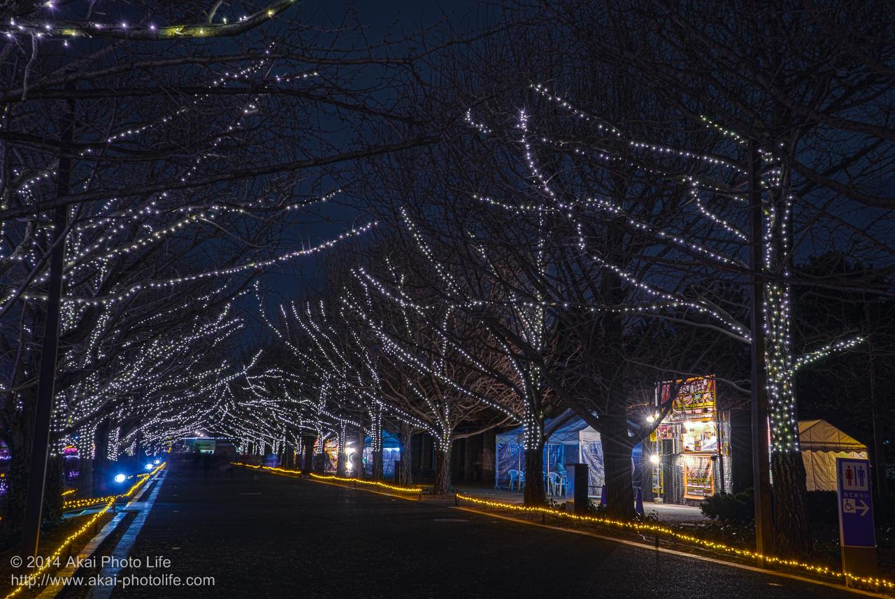 国営昭和記念公園のイルミネーション(銀杏並木)