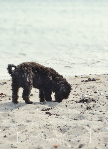 beach, dog, play on the beach, beach finds, treasures from the beach, dog on beach
