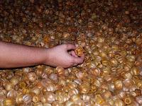Amora | Framboesa | Mirtilo | Physalis | Pimentas  Produção Orgânica | Vendas para Rio Janeiro