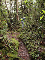 Jungle Trekking, Cameron Highlands