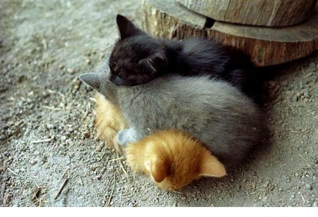 Animales que usan a otros animales como almohada