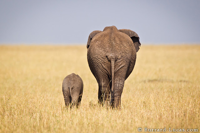 African wildlife photography by Burrard-Lucas, wildlife photos, animal photos, animal pictures, amazing animal photos, wonderful animal pictures