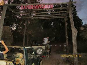 "Entry into ""Magdhi Zone"" of Bandhavgarh national park."