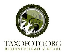 Este blog colabora con el proyecto taxofoto