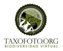 Este blog colabora con el proyecto taxofoto