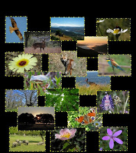 Artículos e imágenes de los Rincones Naturales del Suroeste Salmantino