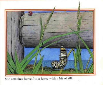 sample page #2 from A MONARCH BUTTERFLY'S LIFE  by John Himmelman