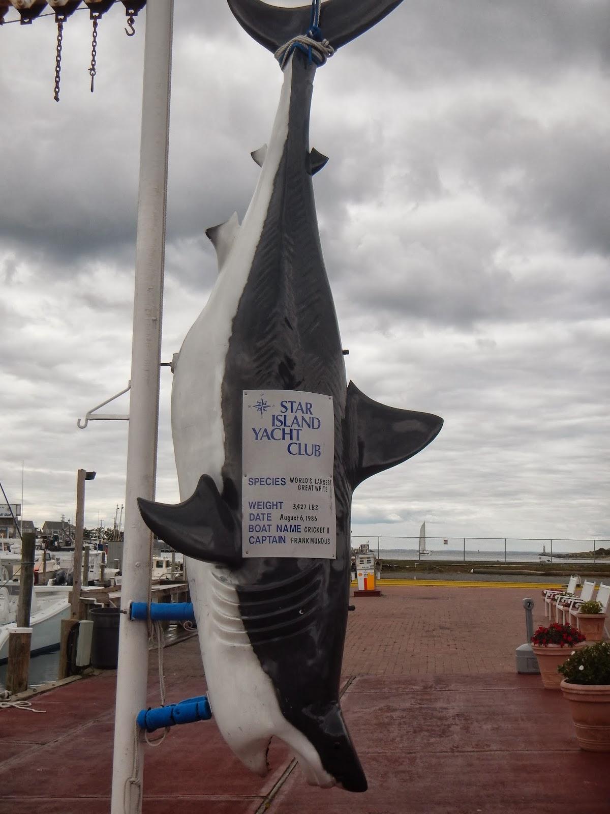Montauk 2013 delamere hopkins for Montauk shark fishing