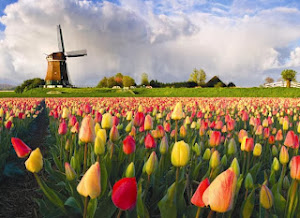 Orenge Tulip Scolarship