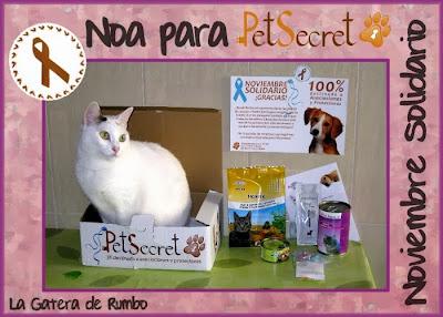 Gata posando para Noviembre Solidarios de PetSecret