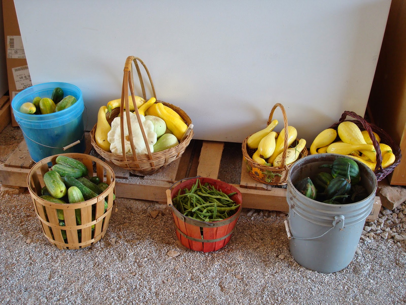 Buckets of garden vegetables including squash, cucumbers and beans