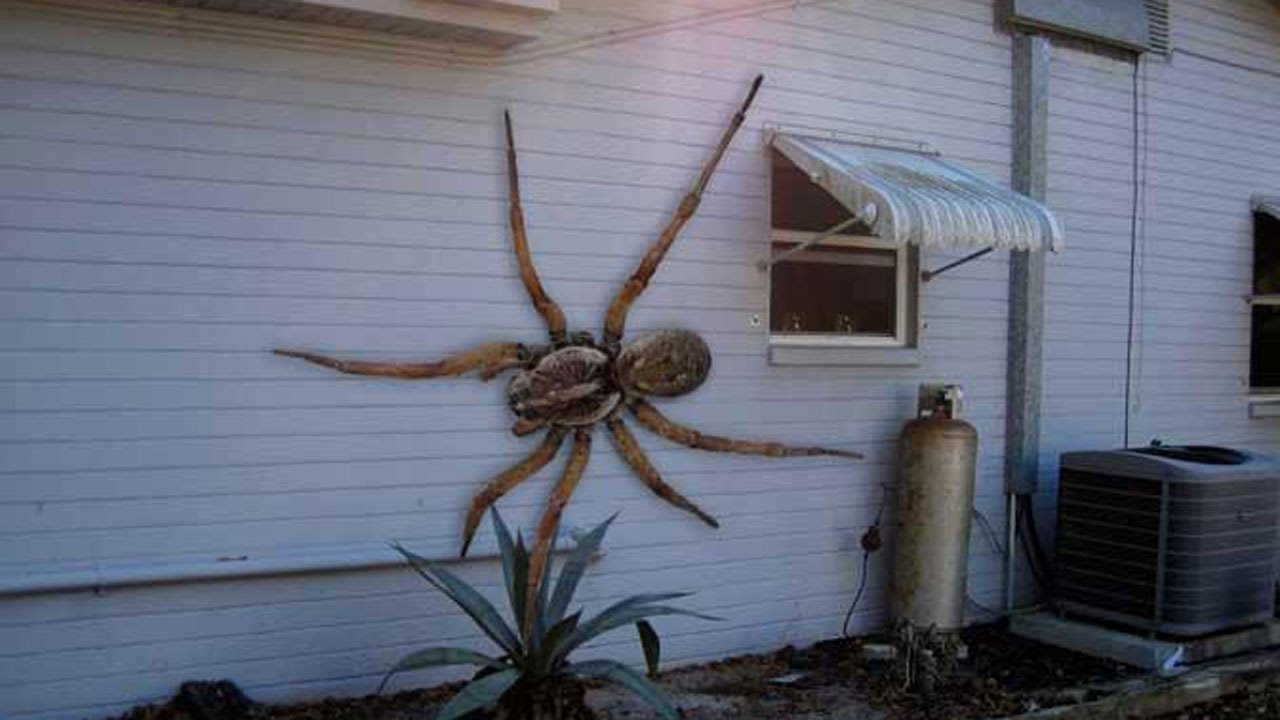 How To Get Rid Of Spiders Under Car