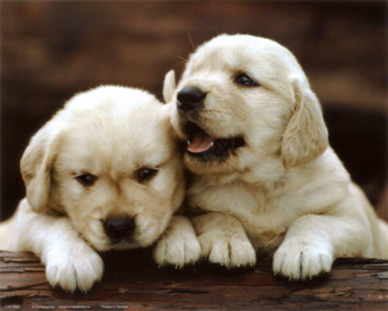 Imágenes de perritos bebés y tiernos - Imagui