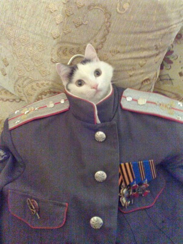 Funny cats - part 96 (40 pics + 10 gifs), cat pictures, kitten wears uniform