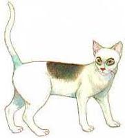แมวกรอบแว่นหรือแมวอานม้า