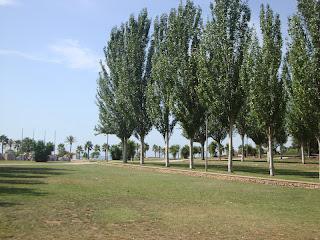 Sant carles de la rápita trees Photo - Tarragona - Spain